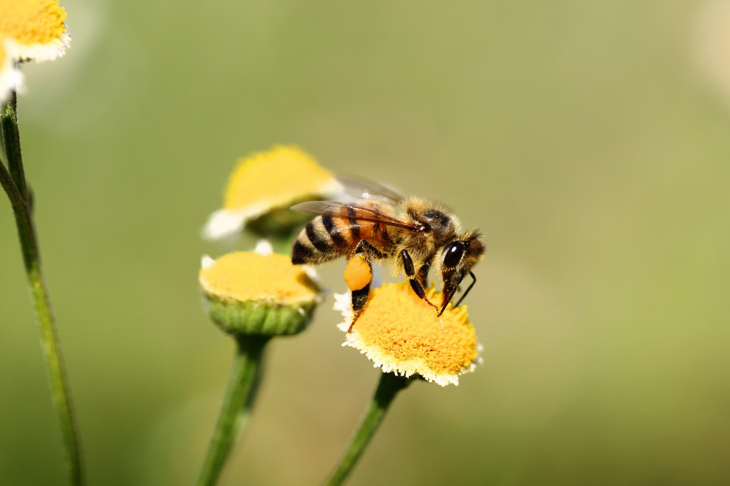 Well Bee Launch - Donate to Save the Bees